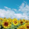 暑中見舞いの例文、時期、贈り方、おすすめ商品